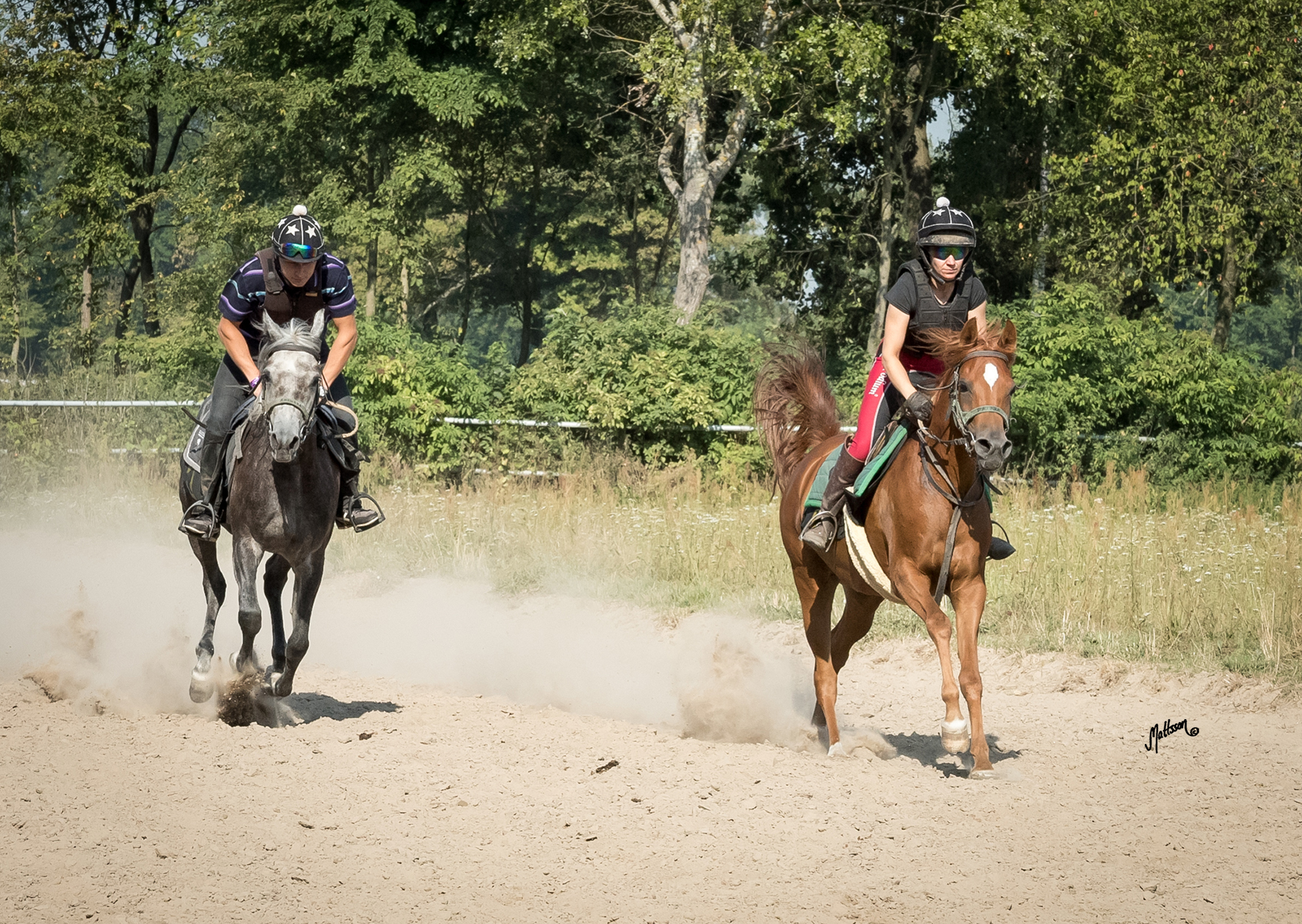 Anawera (Piaff x Altamira) and Patria (Eden C x Palmeta) are getting ready for the Al Khalediah European Arabian Horse Festial