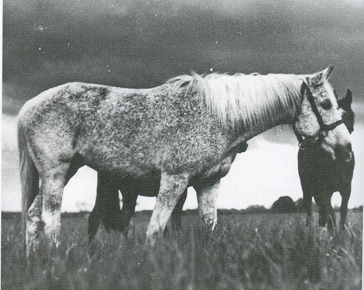Balia 1936 (Kuhailan Zaid d.b. x 25 Kemir/Kemir)