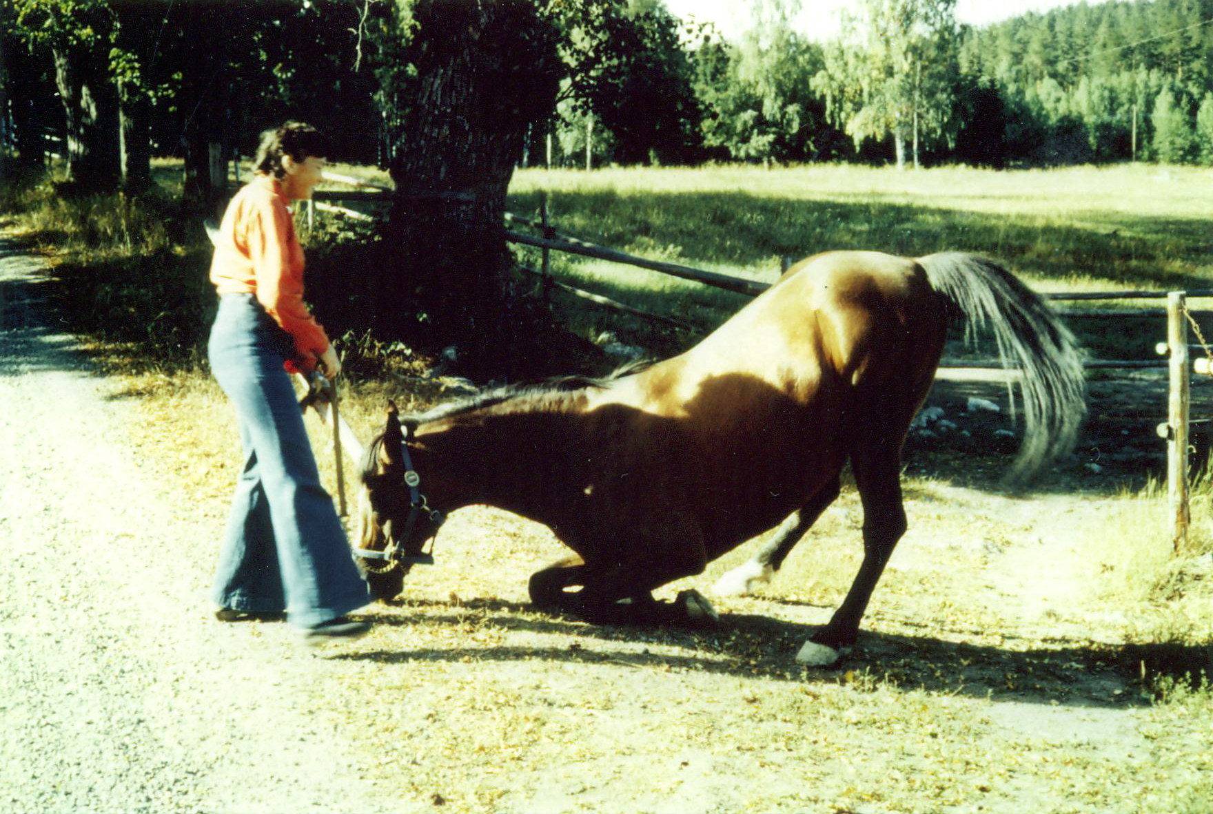 Brita and one of the famous Polish circus-stallions imported from Circus Knie in Switzerland by Erik Erlandsson. Photo: private