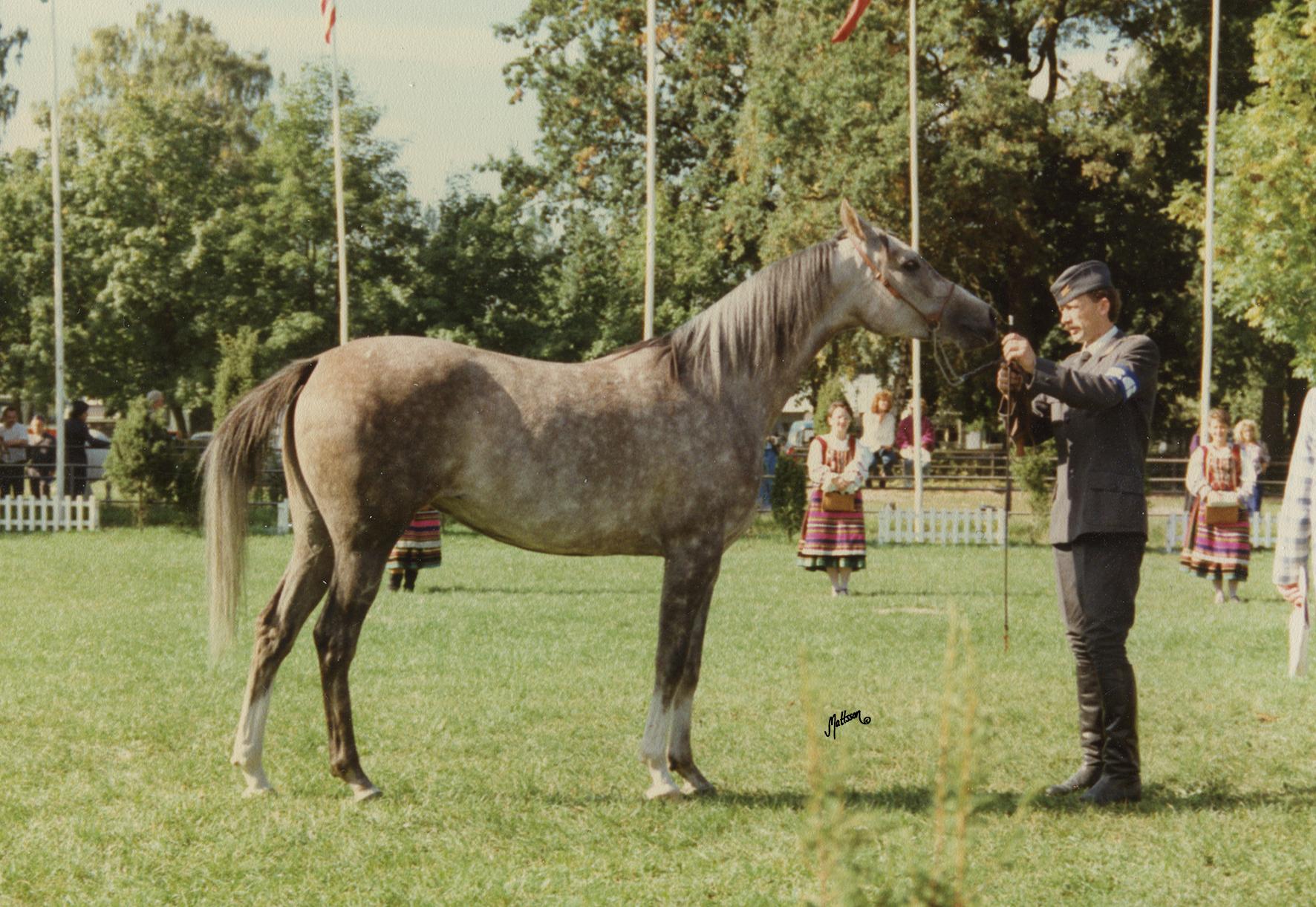 Cudna 1984 (Eternit x Cedrela/Doktryner), photo taken at the Polish National Show in 1989