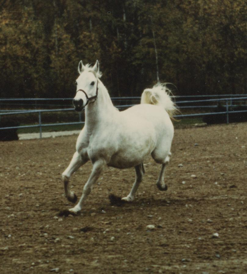 Estrella 1969 (Exelsjor x Cela/Pietuszok) bred by Brita Björkman in Sweden.
