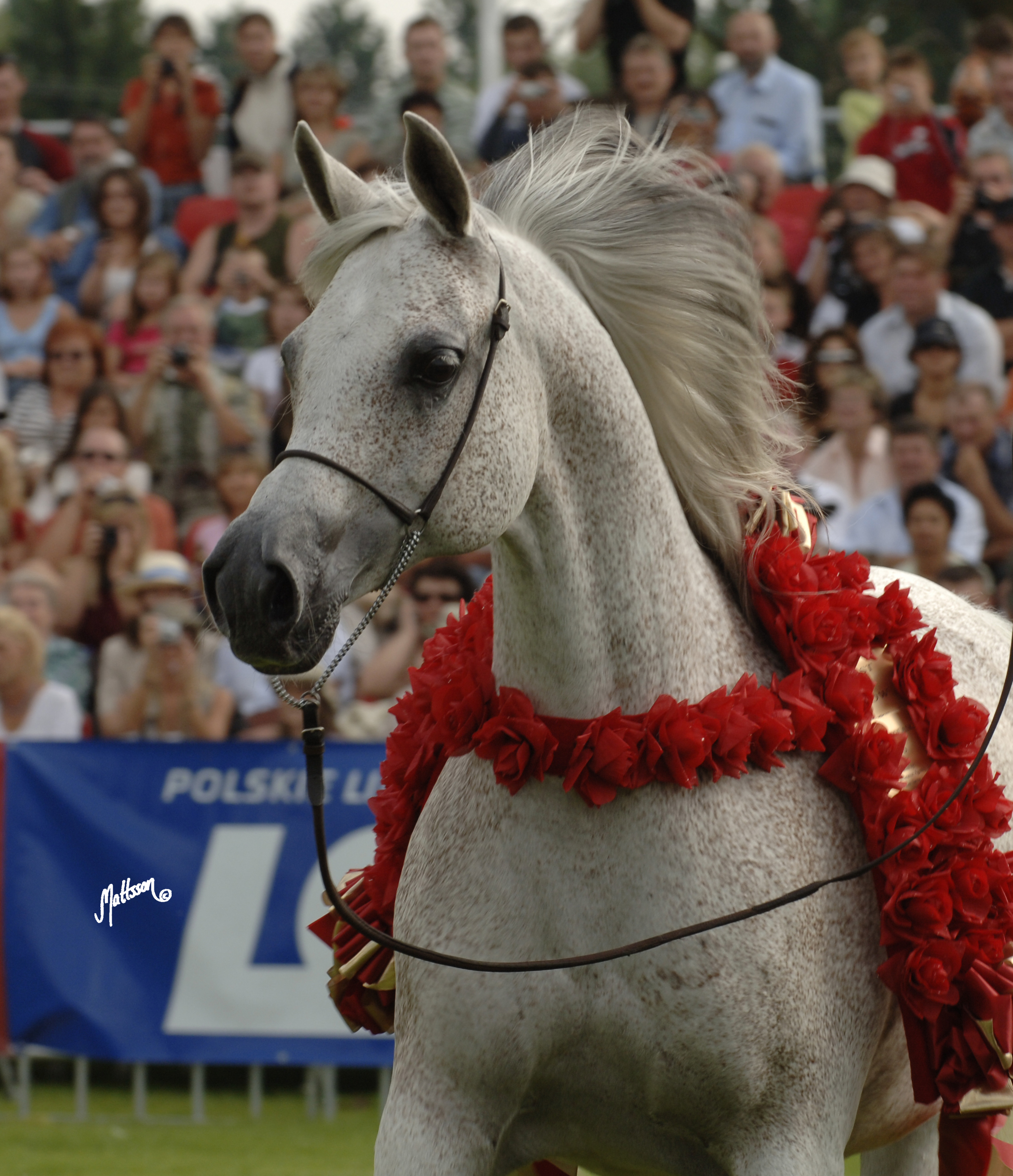 Gaskonia Polish National Champion Mare and Best in Show 2006