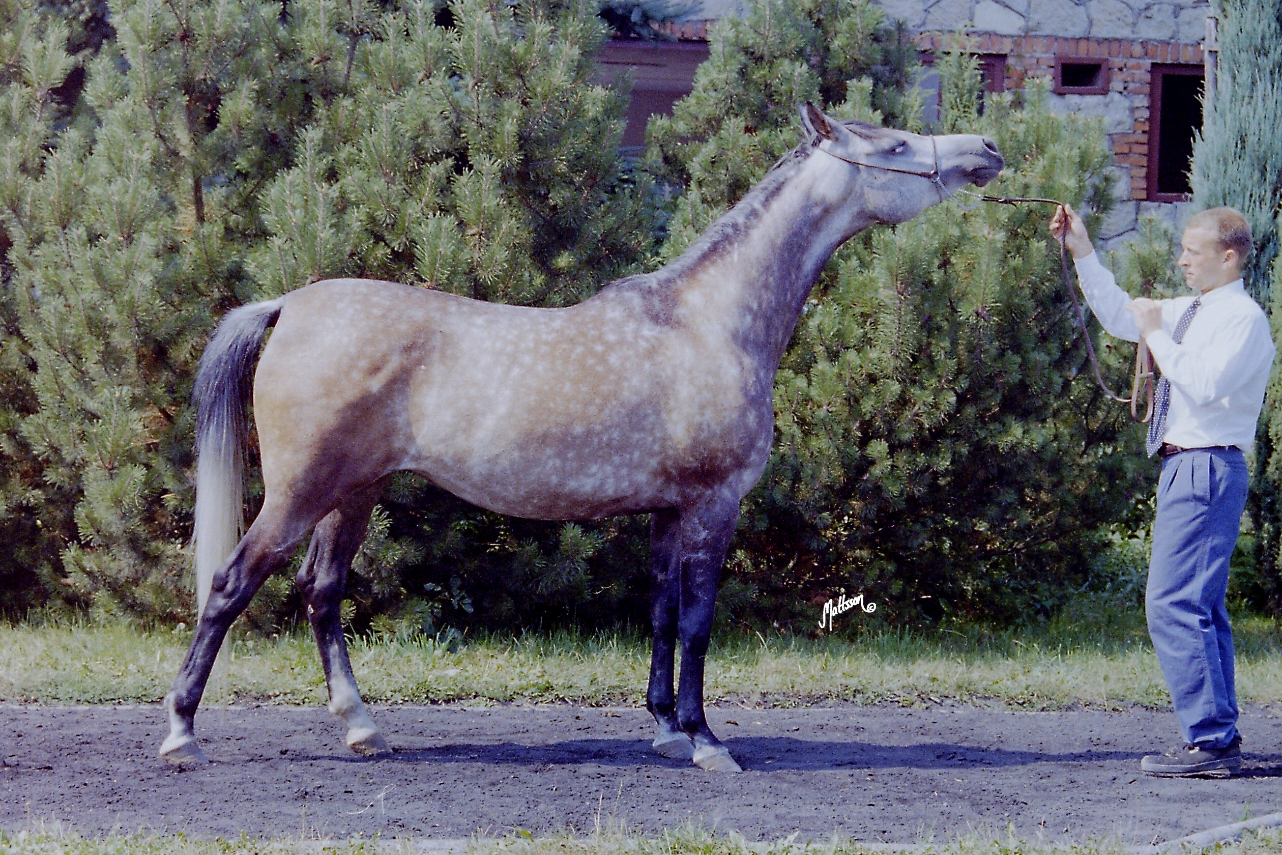 Gaskonia in 1995