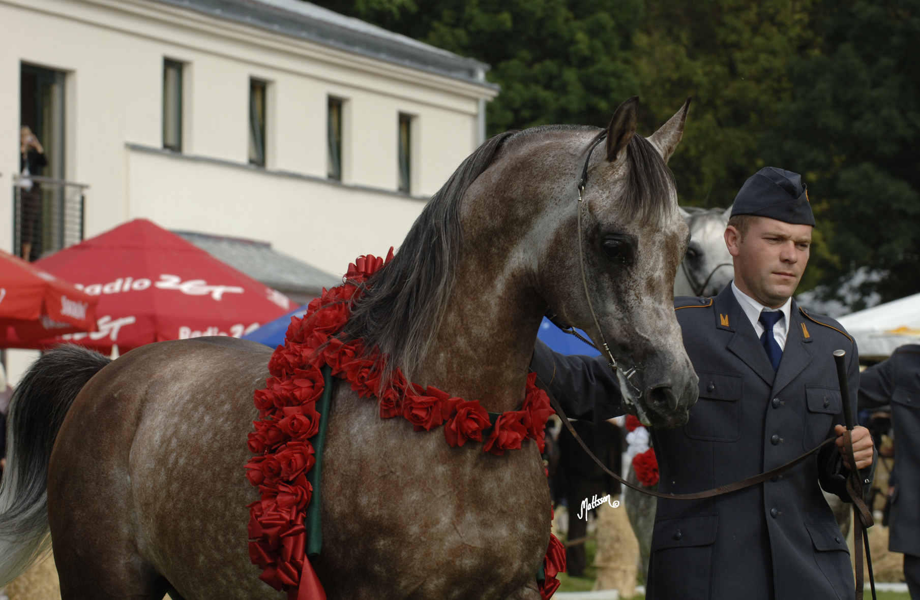 Gaspar (Emigrant x Gaskonia/Probat) Polish National Champion Stallion 2006 with Kamil Kulczynski