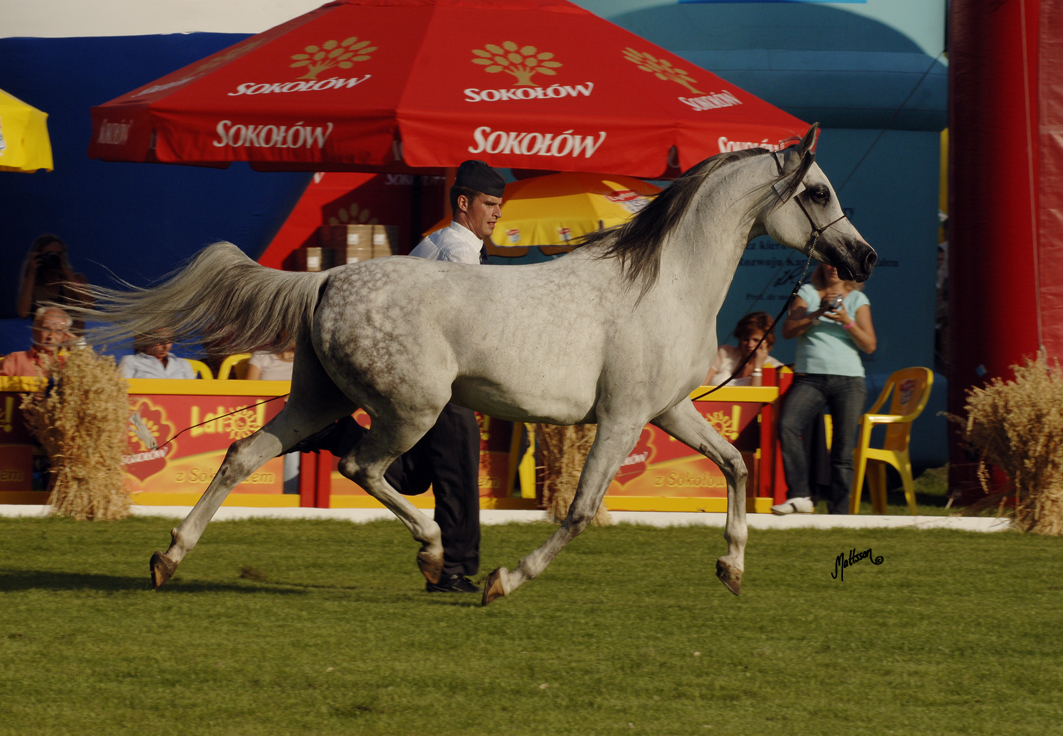 Gehenna - full sister to Georgia. Sold at the Pride of Poland in 2006