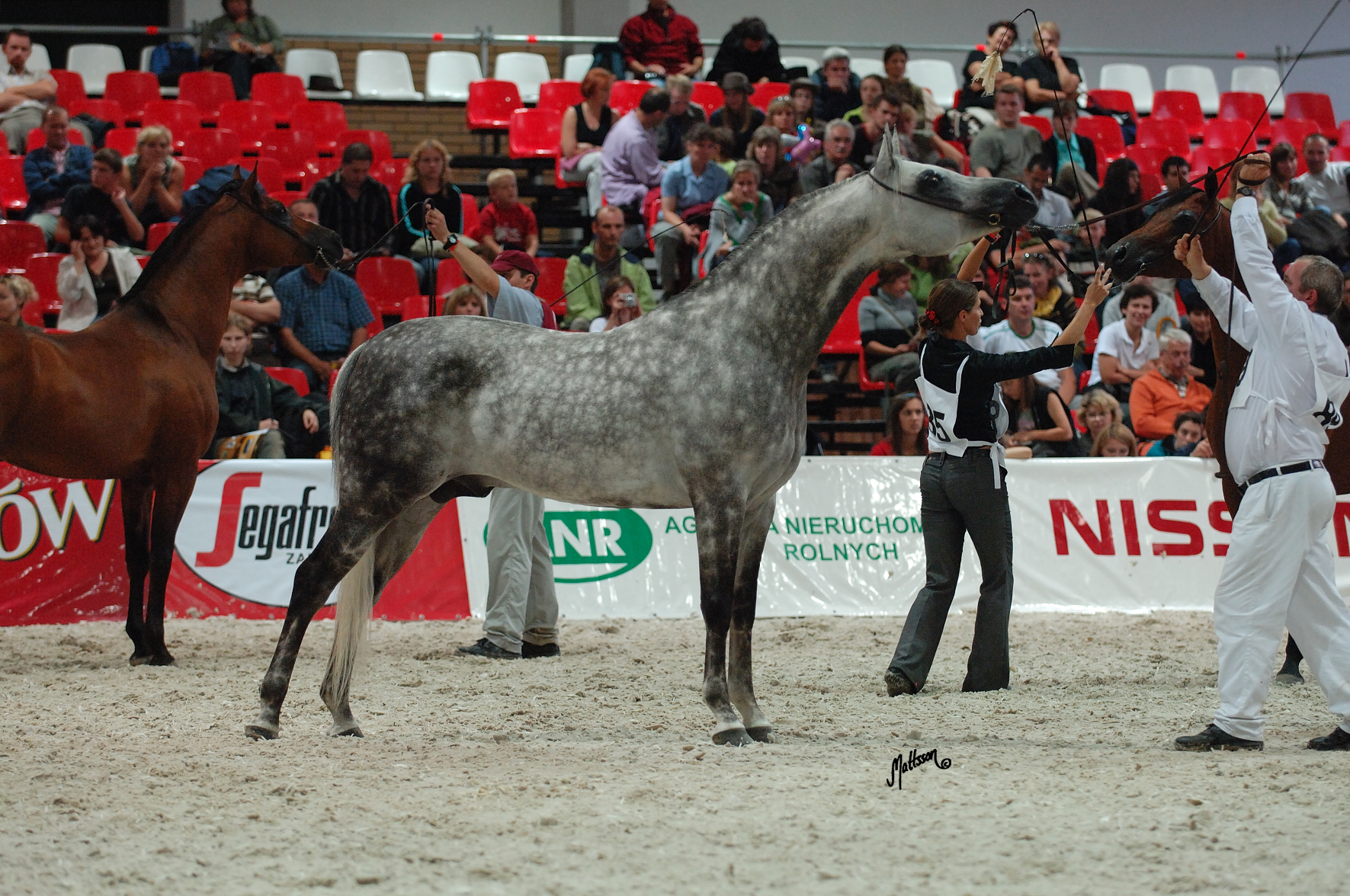 Grafik (Eukaliptus x Gaskonia/Probat) at the Polish National Show in 2006