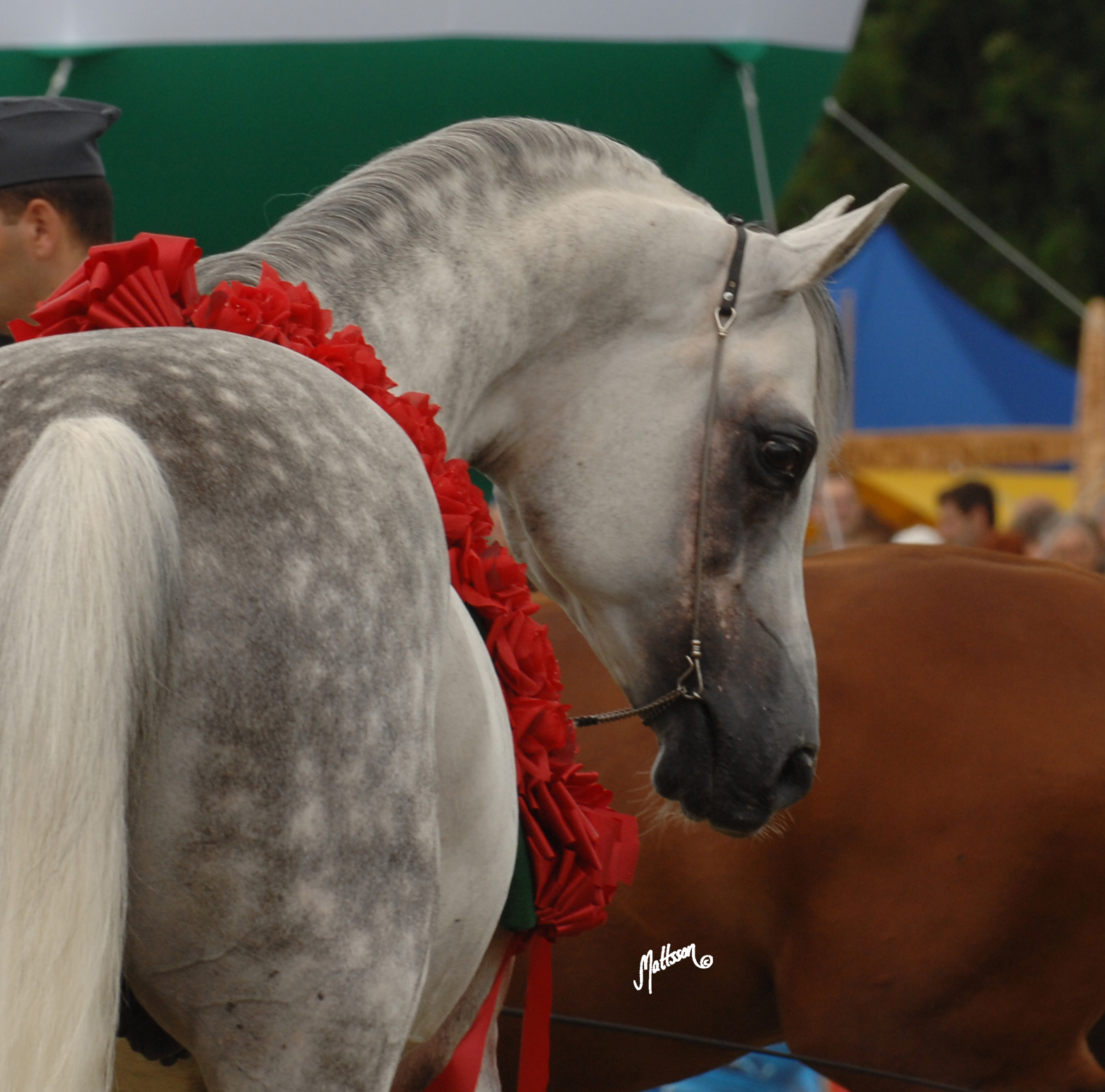 Grafik (Eukaliptus x Gaskonia/Probat) at the Polish National Show