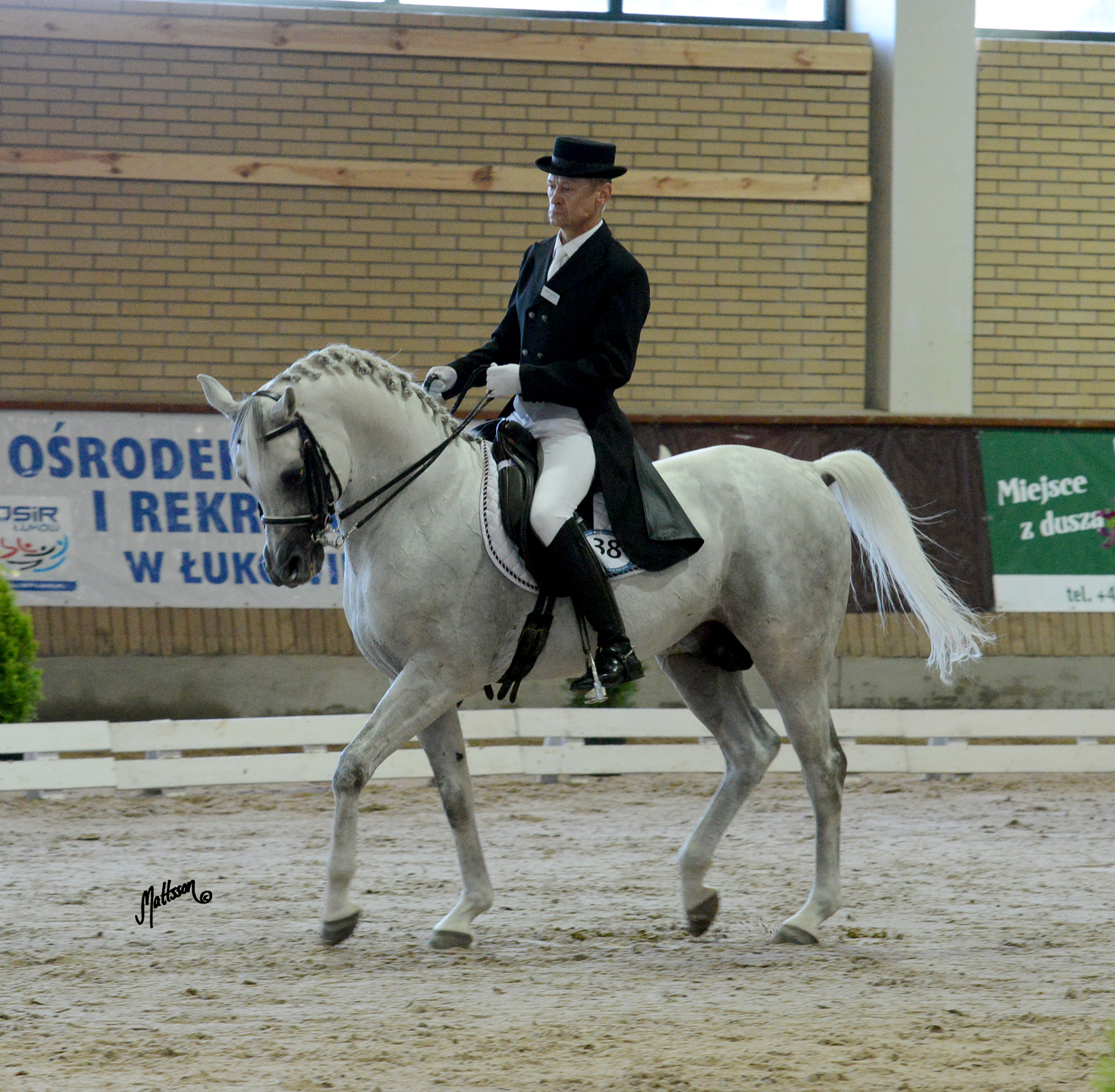 Grafik during the European Arabian Sporthorse Championship in 2014 with Krzysztof Cyra