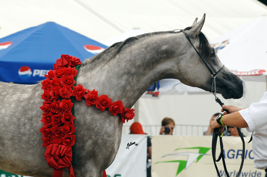 Kabsztad at the Polish National Show in 2008
