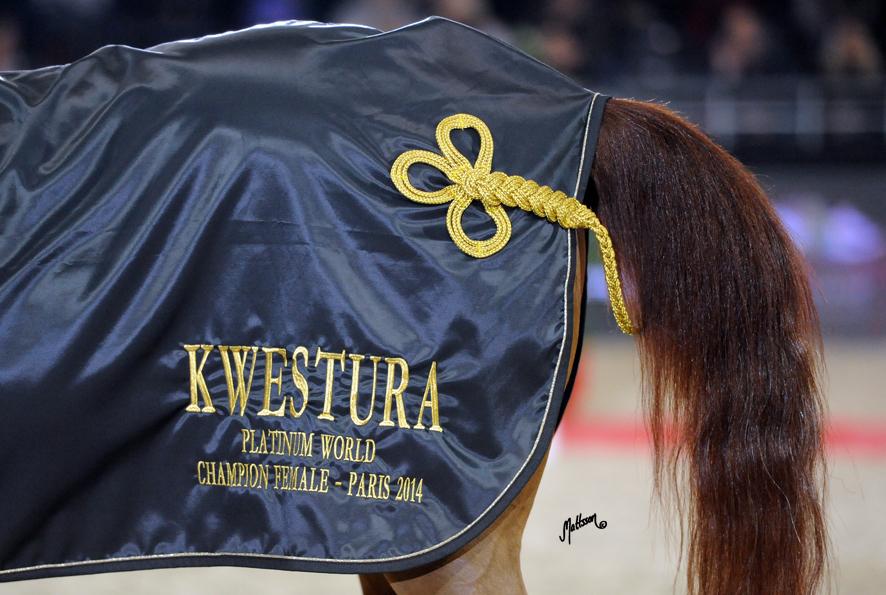 Kwestura8822