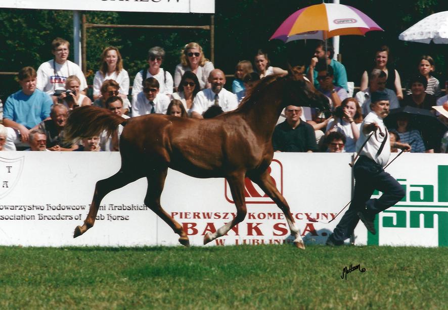 Kwestura at the 1996 Polish National Show