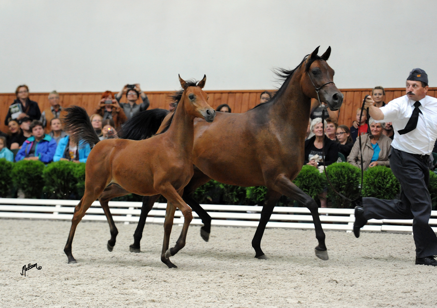 Mesalina with colt Morion