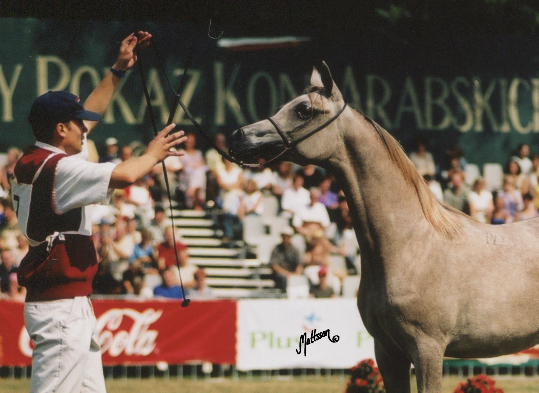 Palmeta as a yearling in 2002
