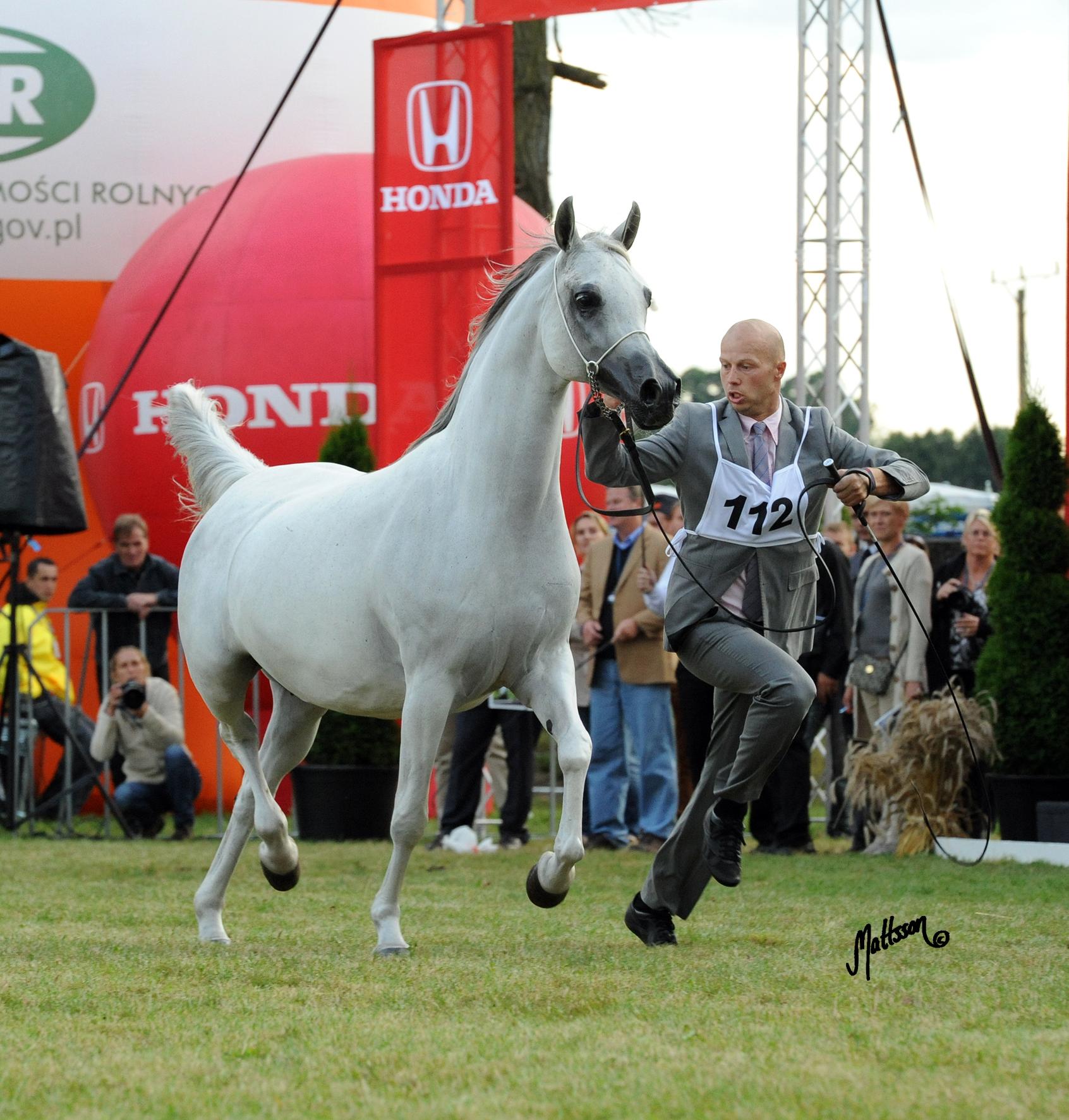 Palmeta at the 2012 Polish National Show