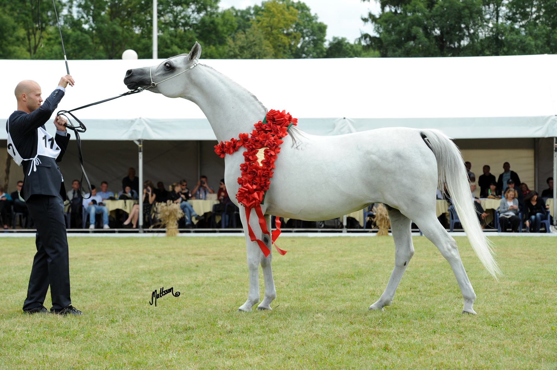 Palmeta - 2012 Polish National Gold Champion Mare and Best in Show