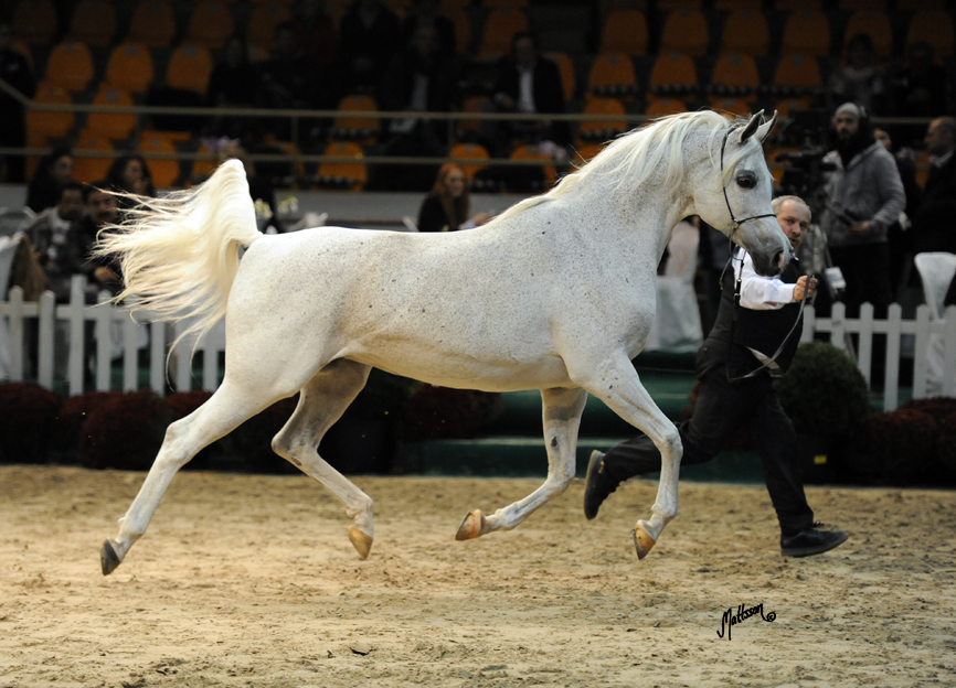 Palmira at the 2013 European Championships
