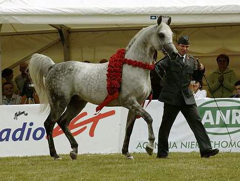 Piaff (Eldon-Pipi/Banat) 2005 Polish National Champion Stallion shown by Jan Trela
