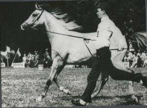 Pianola (Bandos x Pilarka/Palas) 1983 Polish National Junior Champion Mare