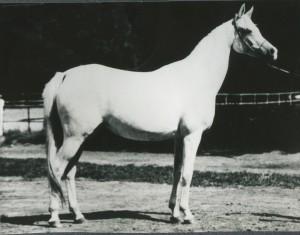 Pilarka 1975 (Palas x Pierzga/Negatiw)