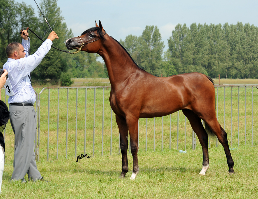 Pogrom 1 year old