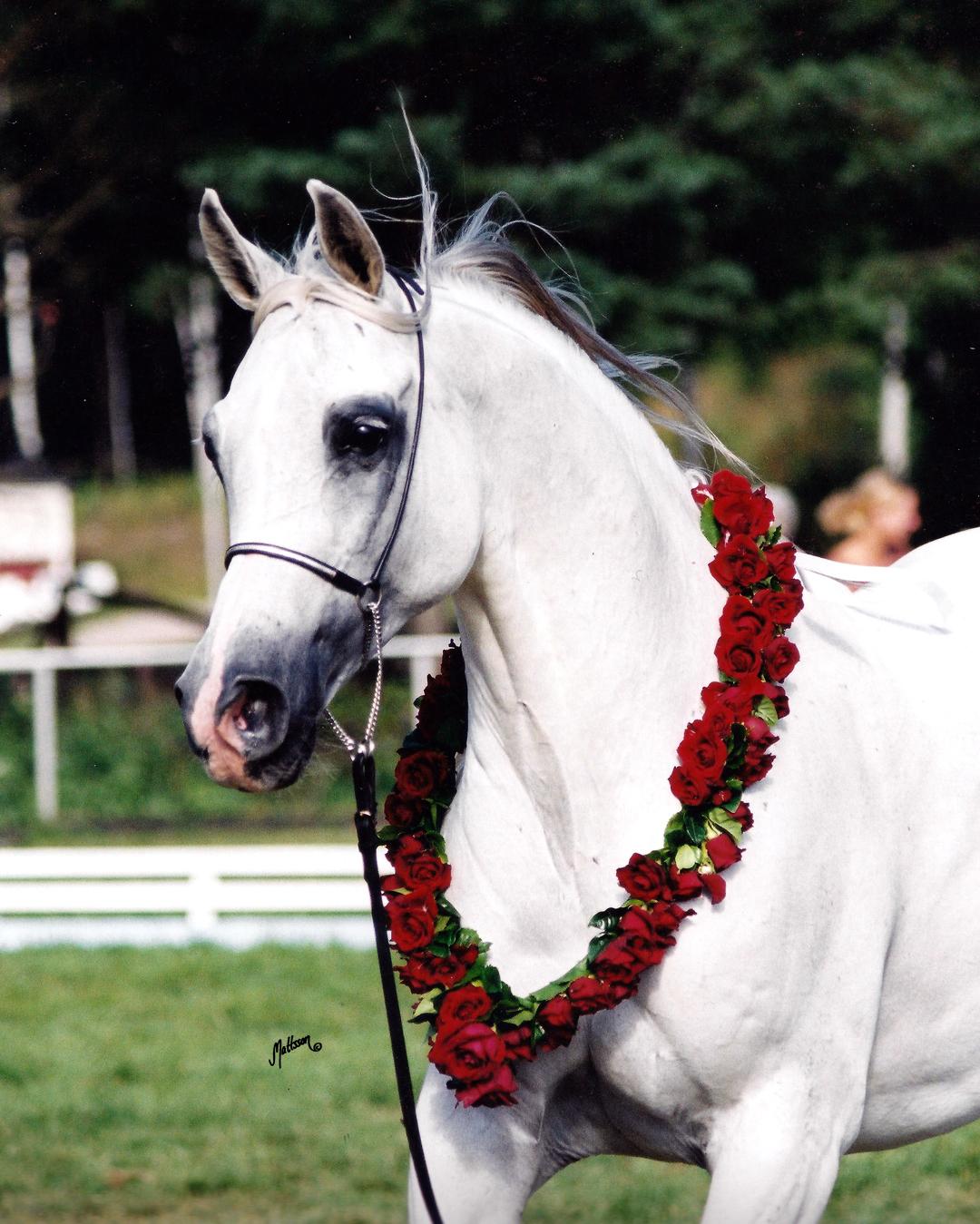 Prognoza (Etogram- Palestra) 3 times Swedish National Champion Mare