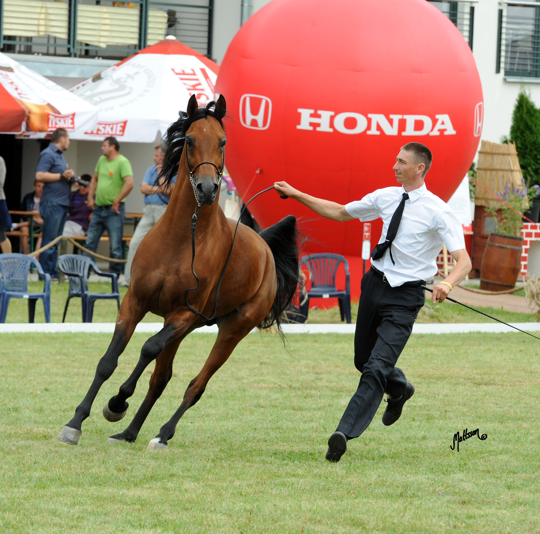 Wadi Nur at the Polish National Show in 2012 shown by Piotr Dwojak
