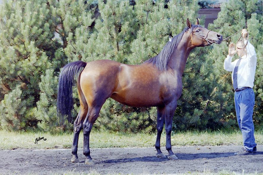 Wiazma in 1995