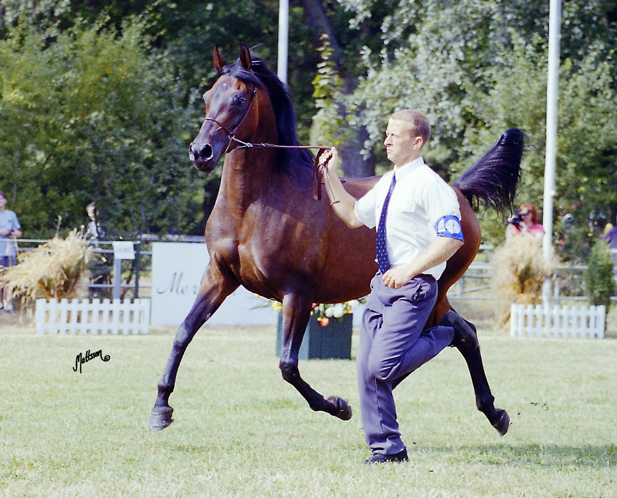 Wiazma and Scott Benjamin at the Polish National Show in 1995
