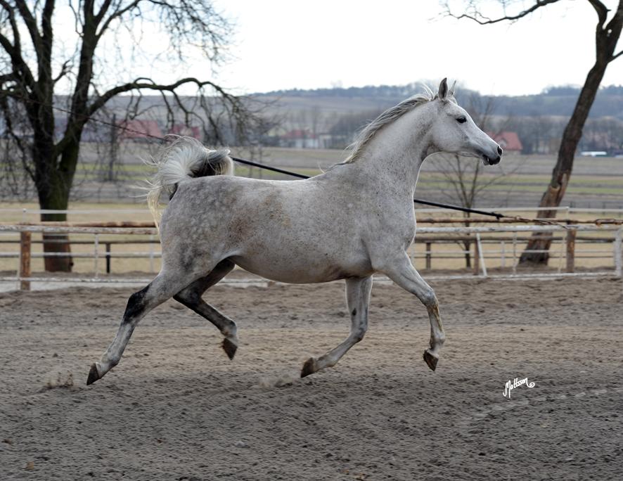 Wieza Babel heavy in foal March 2011