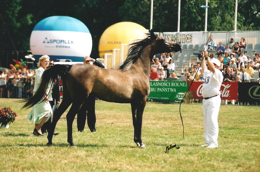 Wieza Babel at the Polish National Show in 2002 (as a two-year old)