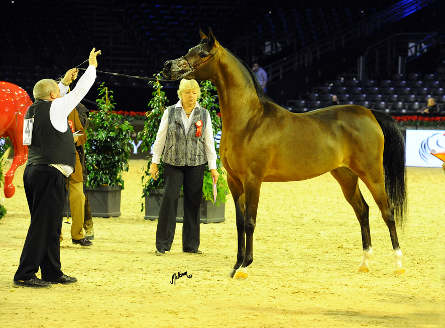 Wieza Mocy and Mariusz Liskiewicz at the World Championships in Paris 2012