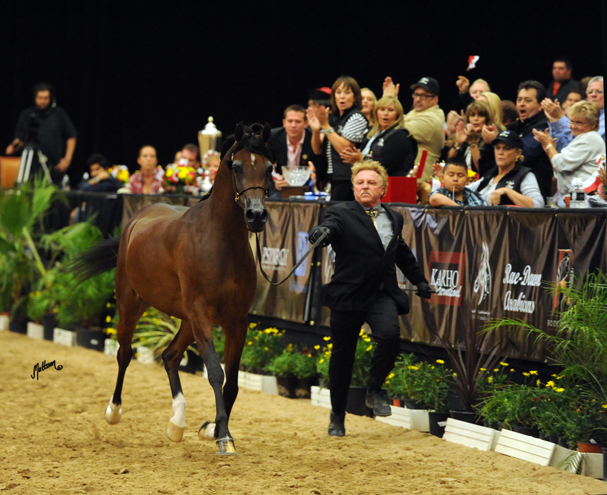 Wieza Mocy and David Boggs at the Arabian Breeders World Cup in Las Vegas