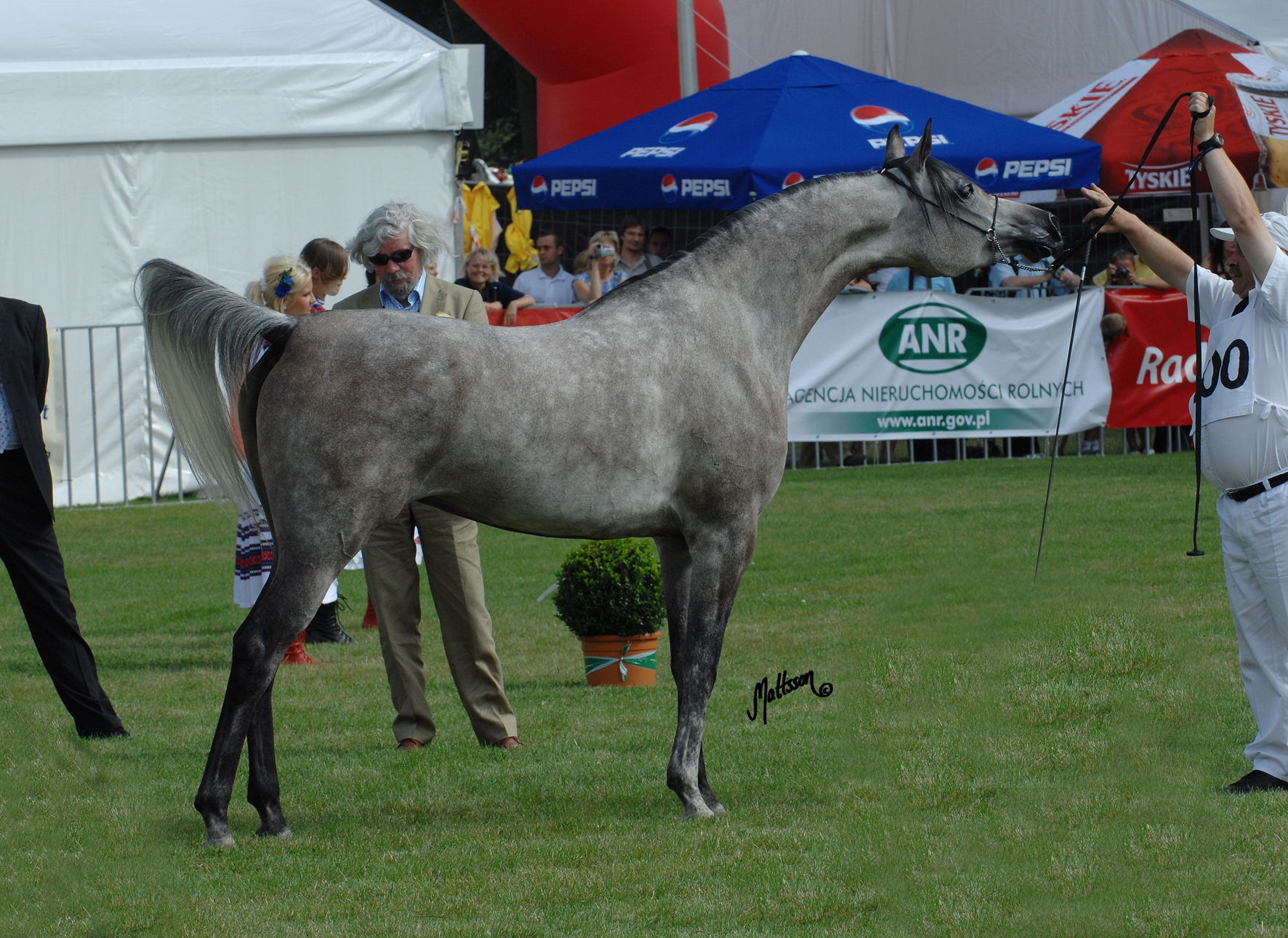 Wilda at the 2009 Polish National Show when she was named Reserve Champion Mare shown by Mariusz Liskiewicz