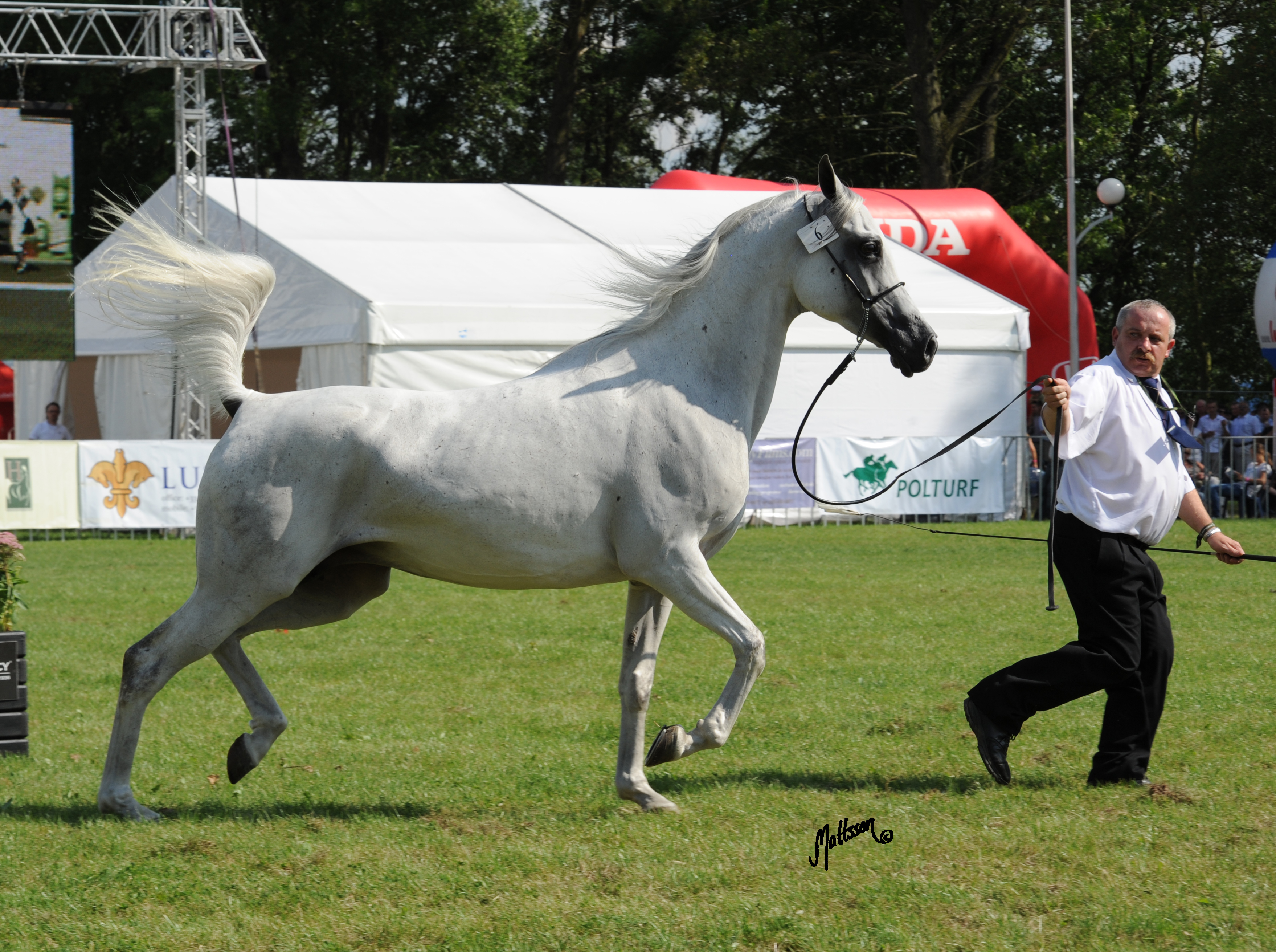 Wilga at the Pride of Poland sale preview in 2010